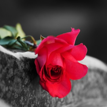 Rose on the tombstone