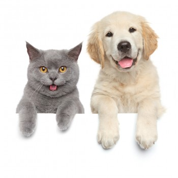 Happy cat and dog show paws above white banner. isolated